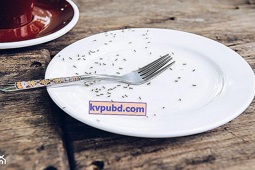 Muurahaisia Keittiössä